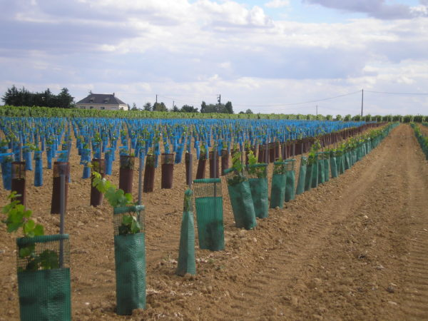 Gaines Planet sur jeunes plantations